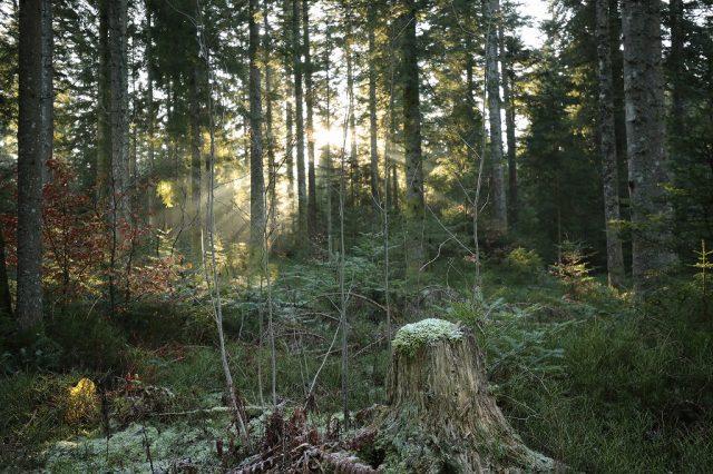 もみの木に出会った3 空気環境の違い